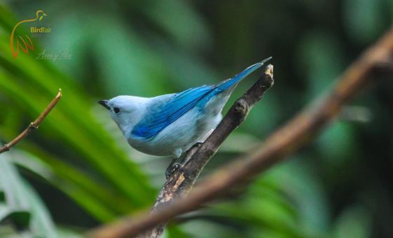 Docente Autónomo participó en Colombia BirdFair