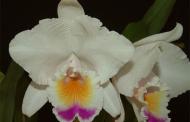 La orquídea, aprovechamiento económico para comunidades vulnerables
