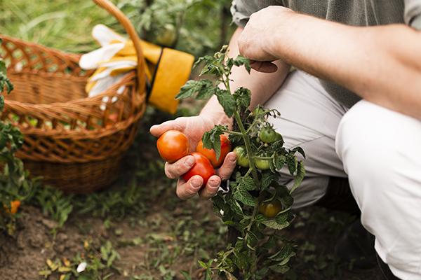 Impactando comunidades desde la agricultura urbana.