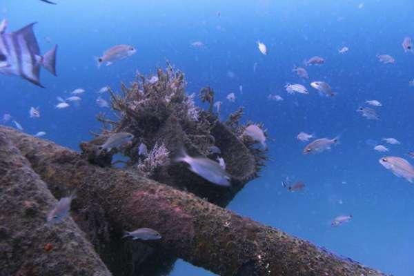 Arrecifes artificiales aumentan la vida marina en el Caribe colombiano